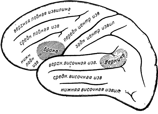 Левое полушарие, центры речи