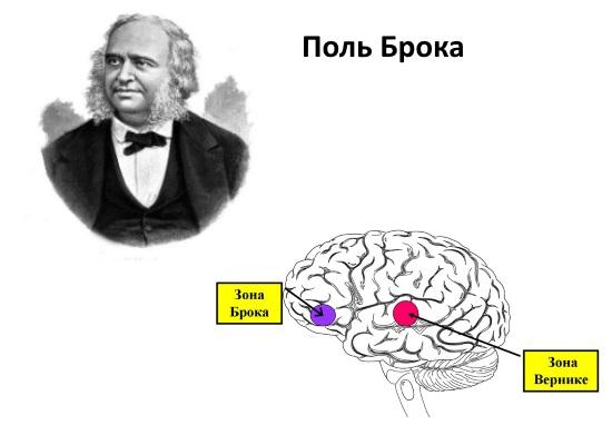 Зона Брока в головном мозге