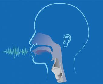 Голосовой аппарат человека: строение и функции