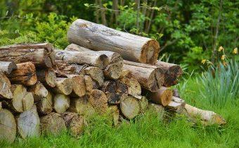 Скороговорка «на дворе трава на траве дрова» и ее вариации о которых вы не знали!