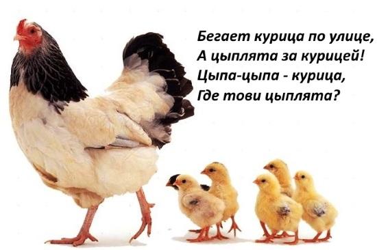 Скороговорка про курицу